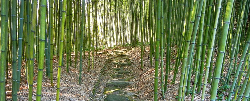 Marcher-au-Japon